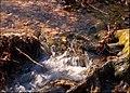 Sinking Stream in Hobbs State Park & Conservation Area.jpg