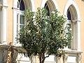 Siracusa Italy - Creative Commons by Gnuckx - panoramio.jpg