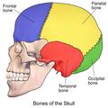 Skull Bones Part 2.png