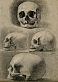 Skulls; four figures. Pencil and chalk drawing by C. Landsee Wellcome V0008288.jpg