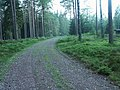 Small road in forrest - panoramio.jpg