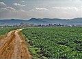 Smer Čaňa - panoramio.jpg