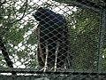Snap from Bannerghatta National Park Bangalore 8550.JPG