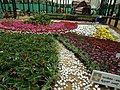 Snap from Lalbagh Flower Show Aug 2013 8581.JPG