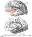 Sobo 1909 670-671 - Uncinate fasciculus.png