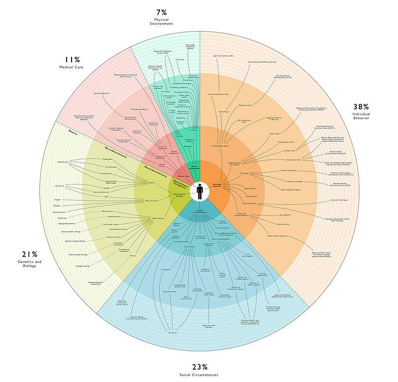 File Social Determinants Of Health Infoviz Jpg Wikimedia