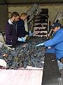 Sorting grapes before crusher destemer.jpg