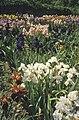 Southfrance-1987-0014 hg.jpg