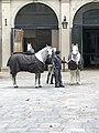 Spanish Riding School Stallburg 2018.jpg