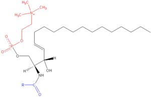 Sphingomyelin - Image: Sphingomyelin