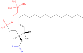 Lecithin–sphingomyelin ratio - Sphingomyelin