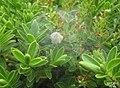 Spider nursery (FG) (5920883865).jpg