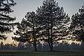 Spomen park Bubanj predvečerje.jpg