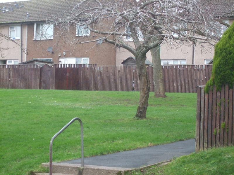 File:St Ann's Hungerhill Road Tulip 6442.JPG