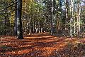 Staatsforst Rantzau - Waldweg im Herbst 01.jpg