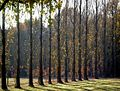Stand of Trees in Owl House Gardens, Lamberhurst - geograph.org.uk - 229665.jpg