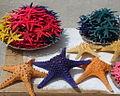 Starfish for sale.jpg