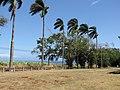 Starr-090616-0704-Roystonea regia-old planting along road-Old Maui High School Hamakuapoko Paia-Maui (24596766379).jpg