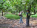Starr-120606-9586-Artocarpus altilis-grove with Forest and Ian-Kahanu Gardens Hana-Maui (25026953322).jpg