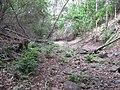Starr-170426-8076-Pteris cretica-view trail-Hawea Pl Olinda-Maui (35187096096).jpg