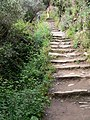 Steps on the Cinque Terre Trail (4712251686).jpg
