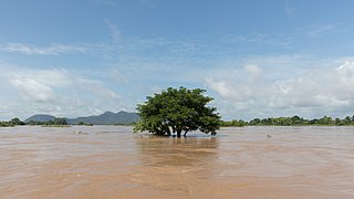 Submerged tree a sunny day in Si Phan Don.jpg