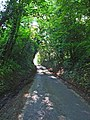 Sunken lane between Great Waldingfield and Edwardstone - geograph.org.uk - 185470.jpg