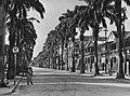 Suriname. Parimaribo. Hoofdstraat met palmen, Bestanddeelnr 935-1490.jpg