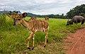 Swaziland (33277578420).jpg