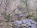 Swilla Glen - geograph.org.uk - 8125.jpg