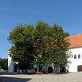 Třebíč, bazilika sv. Prokopa, lípa na nádvoří 01.jpg