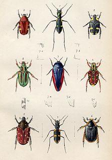 Royal Entomological Society British scientific society