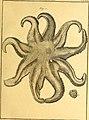 Tableau encyclopédique et méthodique des trois règnes de la nature (1791) (14788008373).jpg