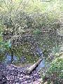 Tankards Pond, Wolvens Lane - geograph.org.uk - 575493.jpg