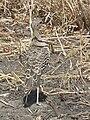 Tanzania 0615 cropped Nevit.jpg