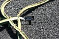 Teguise Guatiza - Jardin - Euphorbia waterbergensis 01 ies.jpg