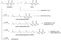 Terpene biosynthesis.png