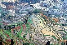 Yunnan-Risorse naturali-Terrace field yunnan china