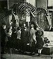 The American Museum journal (c1900-(1918)) (17537537434).jpg