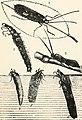 The aquarium - its inhabitants, structure, and management (1910) (19125806073).jpg