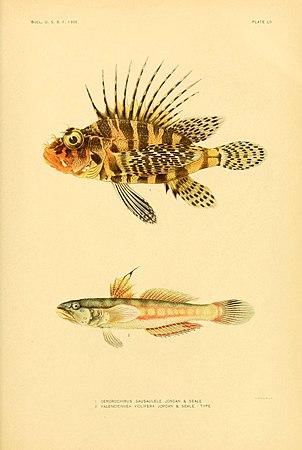 The fishes of Samoa (Plate LII) (5999000822).jpg
