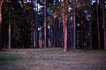 The woods (6135733040).jpg