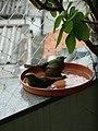 Thraupis palmarum -Brazil -bathing-6a.jpg