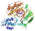 Tibolium castaneum TERT structure.png