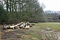 Timber in field - geograph.org.uk - 1748765.jpg