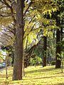 Toyama Kouen Park 戸山公園 - panoramio (1).jpg