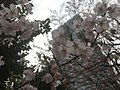 Toyama Park - various - March 2019 14 30 13 512000.jpeg