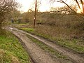 Track on Attenborough Nature reserve - geograph.org.uk - 1091248.jpg
