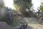 Tree-clearing operation in Kandalay 100925-A-KG159-100.jpg