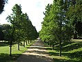 Tree avenue at Ashton Court Estate - geograph.org.uk - 1511856.jpg